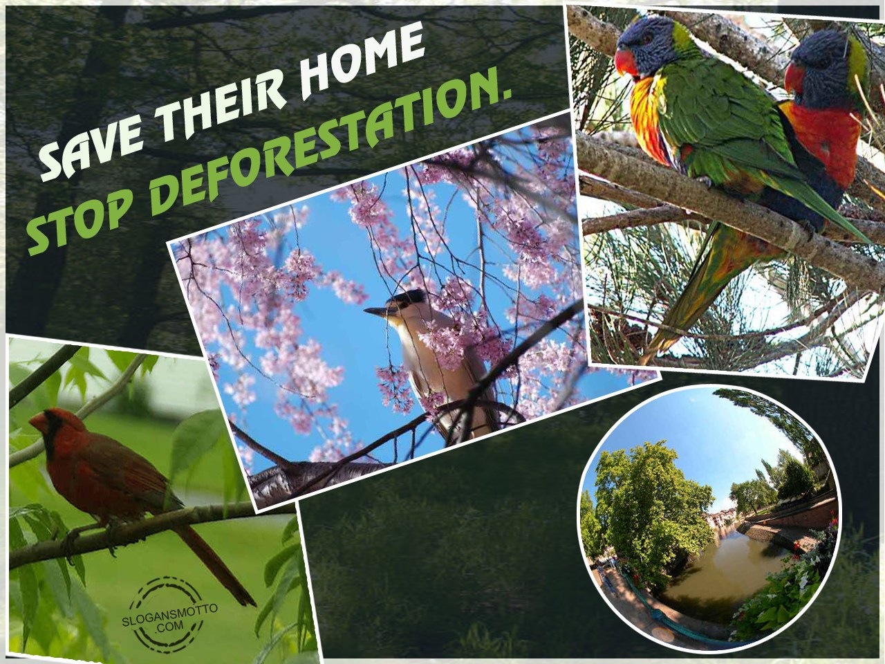 stop deforestation The only way we will ever successfully grapple with deforestation and other  similarly complex environmental problems is to sit down, person to.