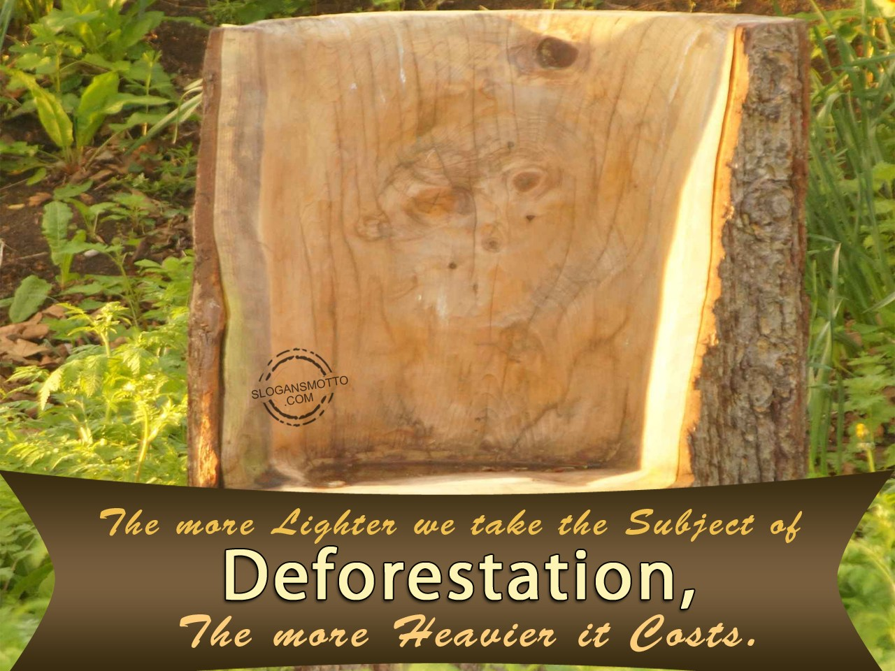 deforestation essay spm Questions are based on the following passage deforestation is the cutting or burning down of all the trees in a forest and the conversion of forested areas to non- forest land for use such as arable land or pasture, or for urban use.