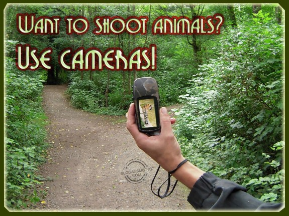 Video Cameras For Home Protection