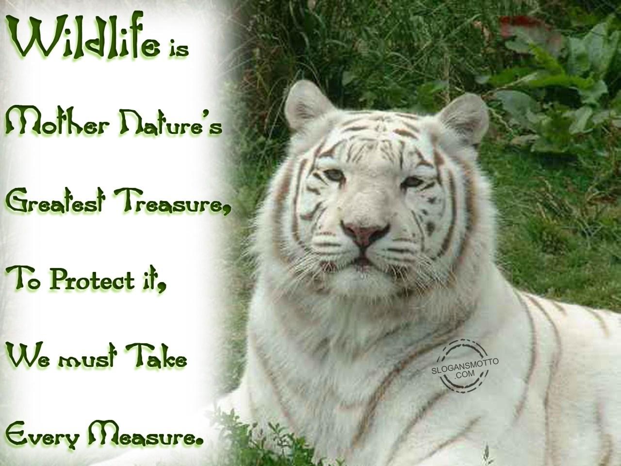 Save Wildlife Slogans